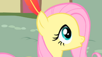 Fluttershy with a feather in her hair S01E22