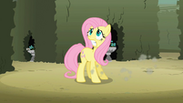Fluttershy trying to find butterflies S2E01