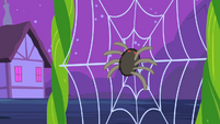 Spider landing on web S2E04