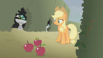 Applejack looking at three apples on the ground S2E01