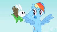 Rainbow Dash staring at Angel-Gummy-Owlowiscious S2E7