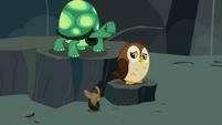 Tank, bat and owl nervous S2E07