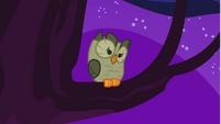 Owlowiscious sitting on the tree S1E24