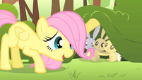 Filly Fluttershy calming critters S1E23