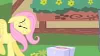 Fluttershy bumps into Pinkie Pie S1E25