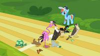 Rainbow Dash and animals S2E07