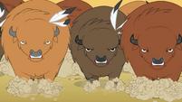 Buffalo charging Rainbow Dash and Pinkie S01E21