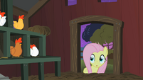 Fluttershy check coop S1E17