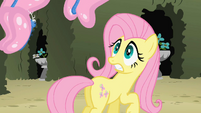 Fluttershy sees the butterflies S2E01