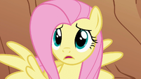 """Fluttershy """"But why?"""" S1E21"""