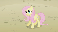 "Fluttershy ""not really"" S2E01"