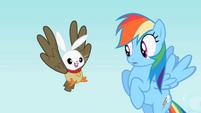 Rainbow Dash sees the owl and bunny hybrid S2E07