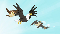 Owl, eagle, falcon and bat flying S2E07