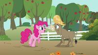 Pinkie Pie tries to apologize to Cranky S02E18