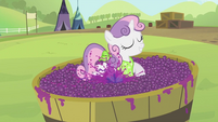 Sweetie Belle stomping on the grapes S2E05