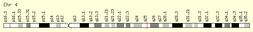 PITX2-gene