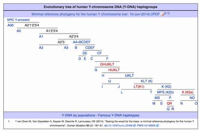 Y-chromosome haplogroups
