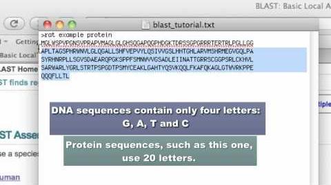 NCBI Blast Tutorial