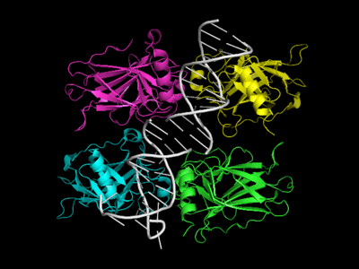 P53 structure