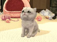 Marie kitten