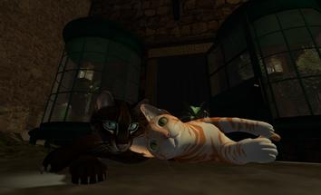 Lazycats