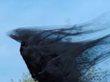Chmurna sowa