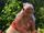 Gramma Tala