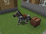 Запись зебры