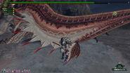 Giant HC Paria Tail