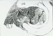 Pukei-Pukei by Schocks