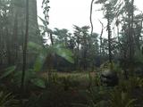 Vieille Jungle