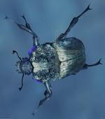MHW-Insecte immortel
