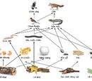 Lưới thức ăn
