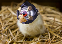 Raagster chicken