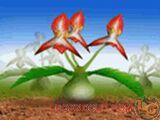 Plant MR1