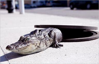 Gators1 510