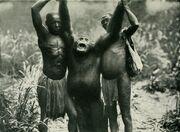 Bili ape in 1912 book