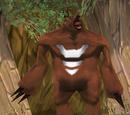 Rotbär