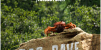 Video - Noisestorm - Crab Rave -Monstercat Release-   Monstercat