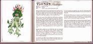 Mandragora book profile