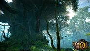 MHOL-Bosque Ermitaño 002