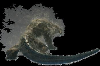 Eflúvico