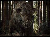 Giant Boar (Chawz)