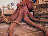 Giant Octopus (The Goonies)