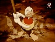 Duck 3