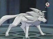 Wolfszahn 4