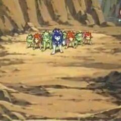 Tiger und seine Gruppe