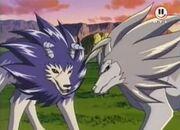 Tiger und Wolfszahn 2