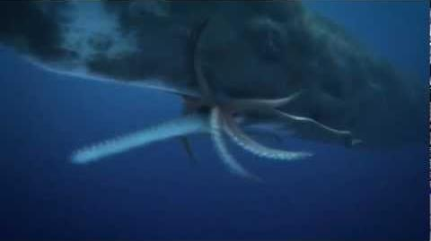 COLOSSAL SQUID (giant squid ) Vs