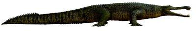 Sarchosuchus